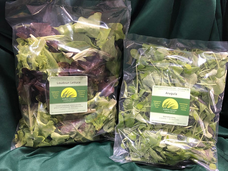 """Lettuce Chat 4/5/2020:  What is this """"out of stock"""", you speak of?"""
