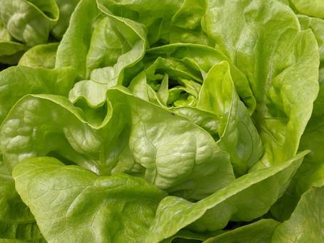 Lettuce Tales: A Lettuce's Tale.