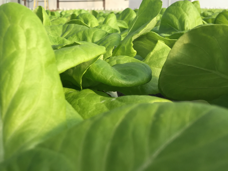 Lettuce Chat, 03/15/2021, Year-In Updates