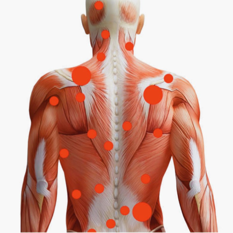 La osteopatía nos ofrece una visión en conjunto del cuerpo humano.
