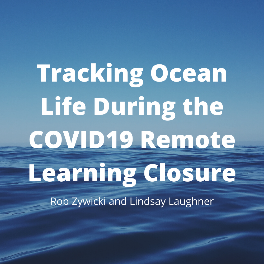 Tracking Ocean Life During the COVID19 R