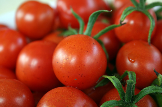 Amid Trump Administration dumping duty a strong period for Mexican greenhouse tomato production