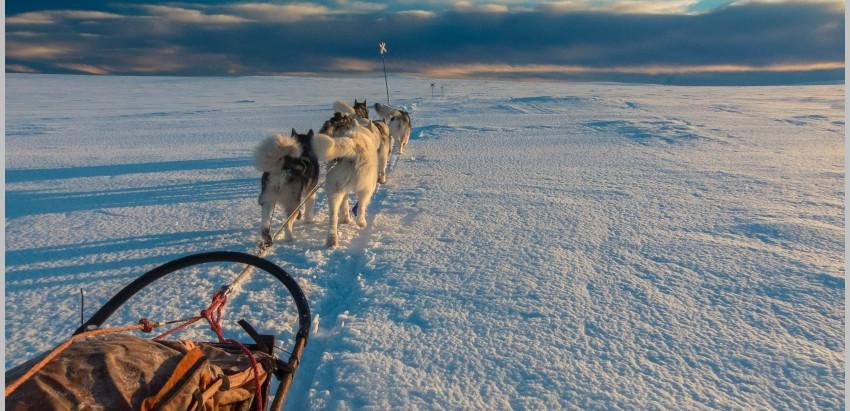 Hundeschlittenfahren in Skandinavien - ein wunderschönes Abenteuer