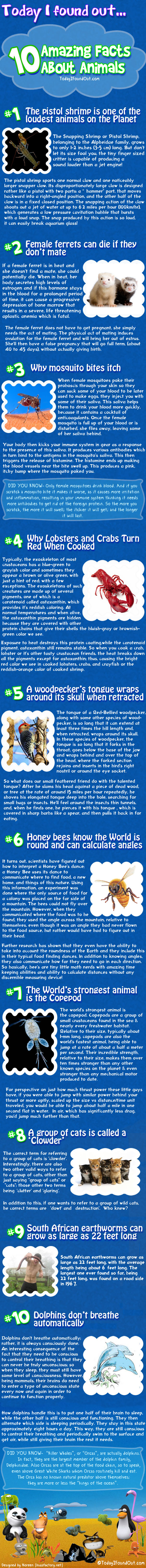 10 Amazing Facts About Animals