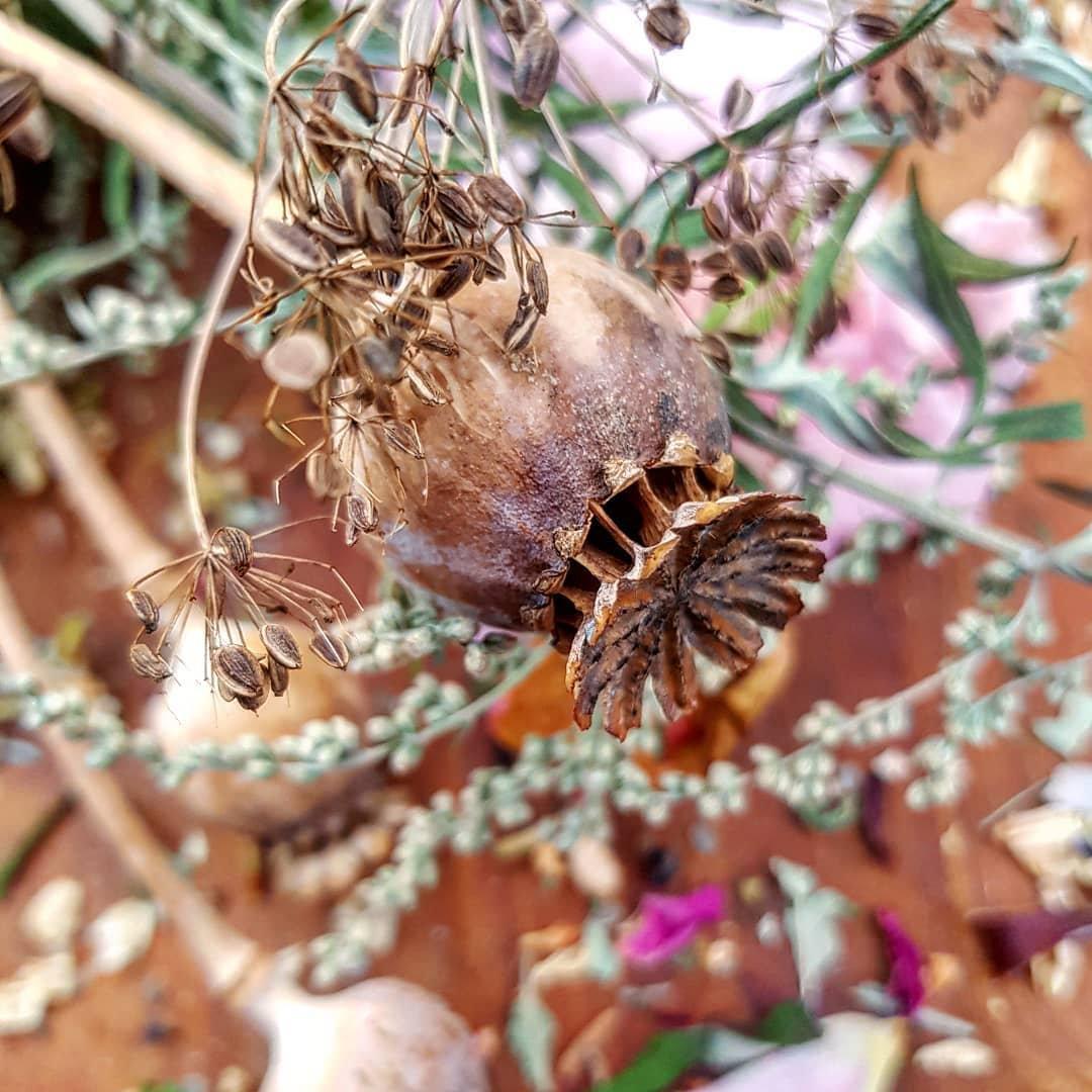 Seed Session : Plant Spirit Reading
