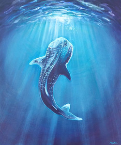 Whale shark 👁 Open your eyes to sister