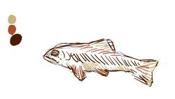 fish_color