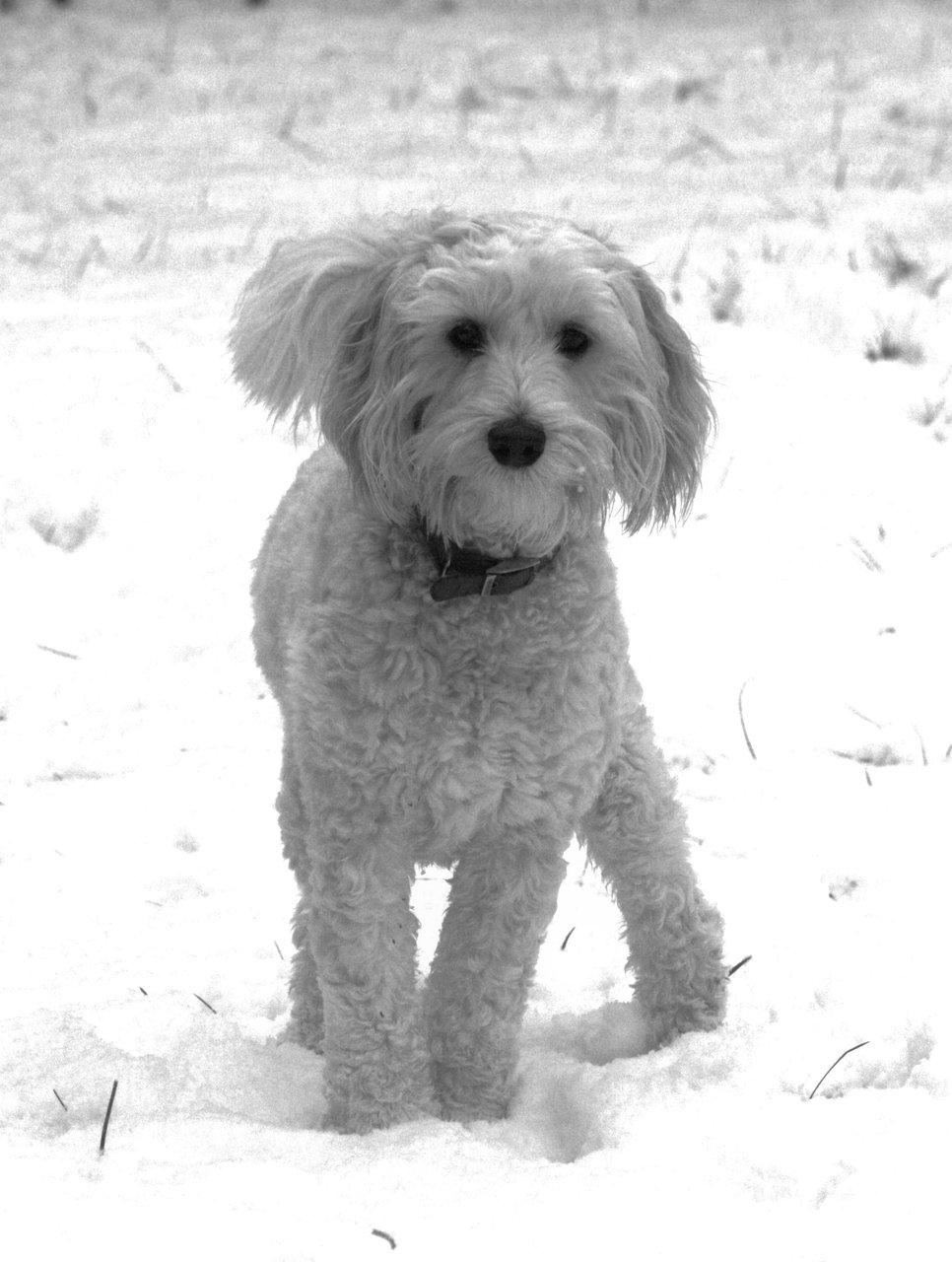 Charlie snow 006.JPG