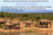 Africa Safari Promo.jpg