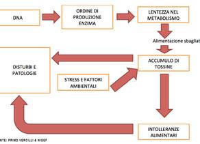 IDONEITÀ ALIMENTARI VS INTOLLERANZE ALIMENTARI - PARTE II