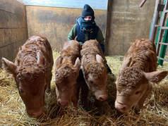 calving at 40 below 2020.jpg