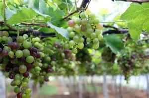 The Fruit On Somebody Else's Vine