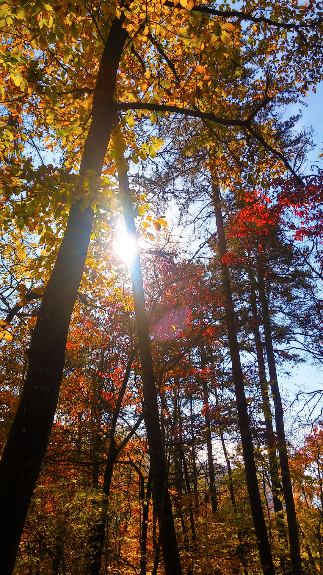 What Autumn Can Teach Us About Stress Relief