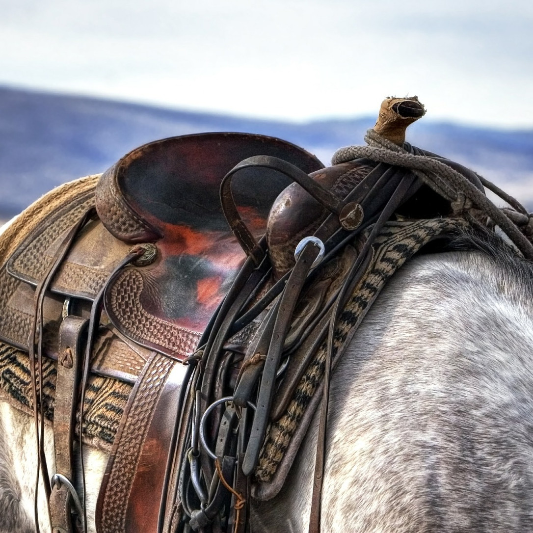 An Empty Saddle (6 Signs You Are Not Ready To Move On)