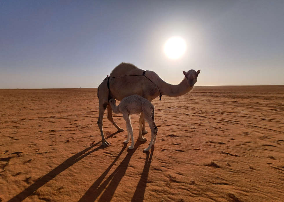 Saudia Arabia PAGANE uniques (45).jpg