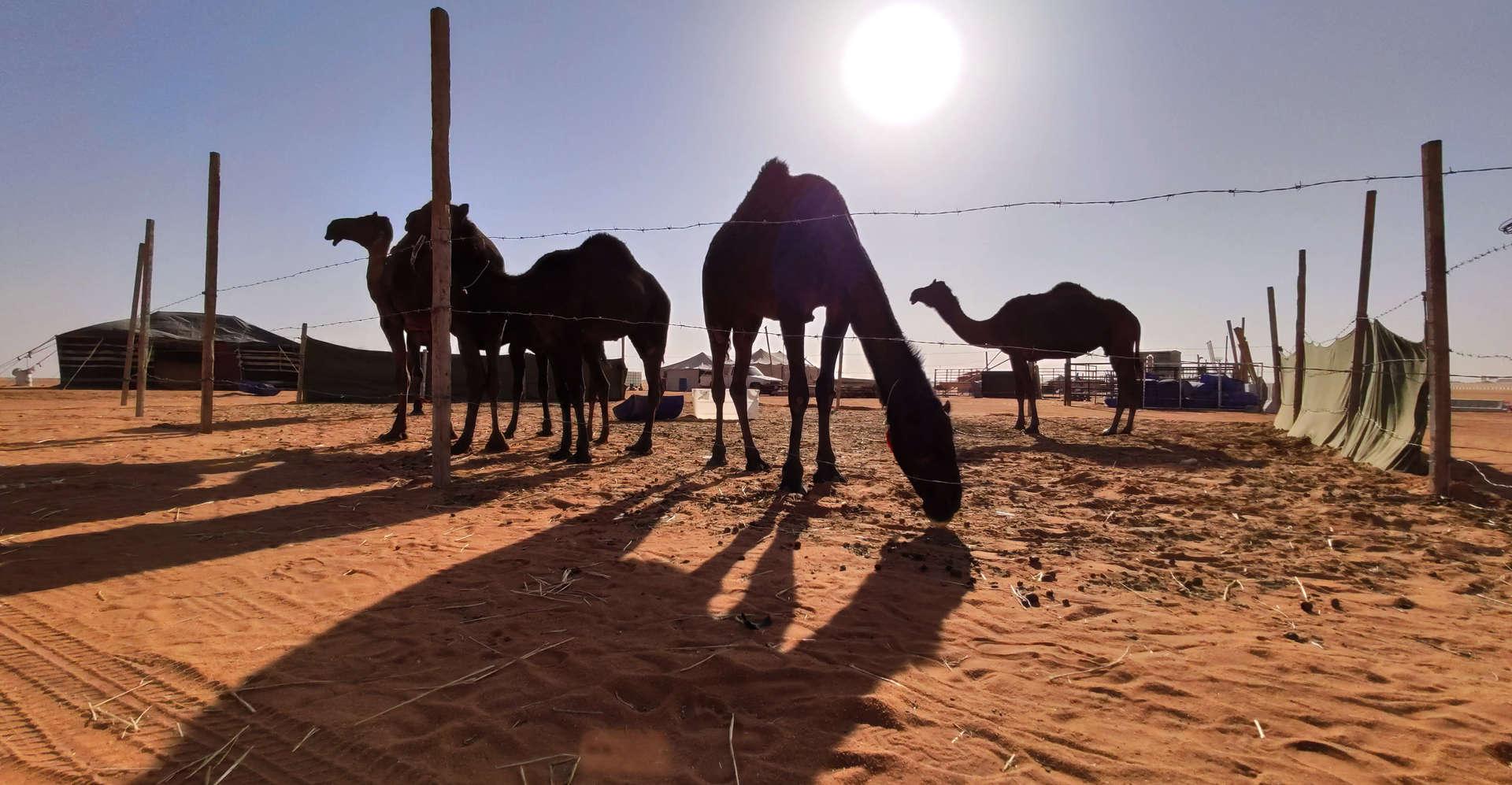 Saudia Arabia PAGANE uniques (41).jpg