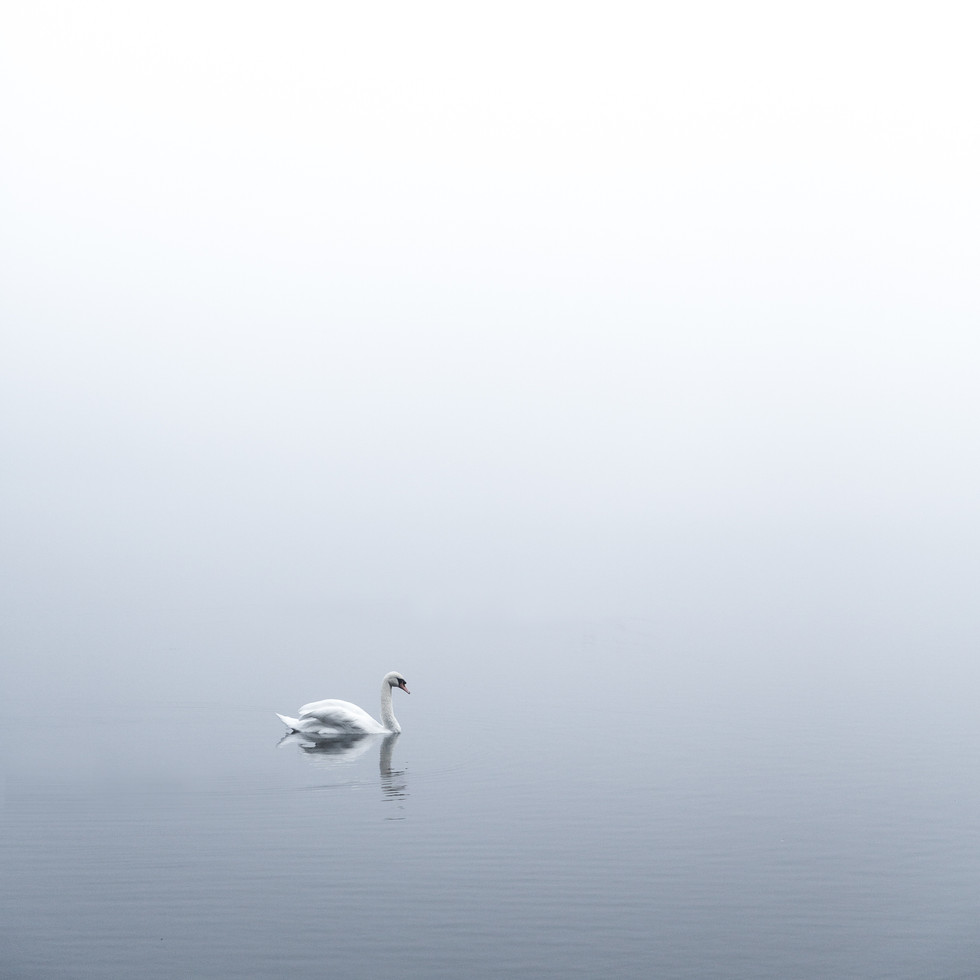 angel-of-the-mist_31240984738_o.jpg