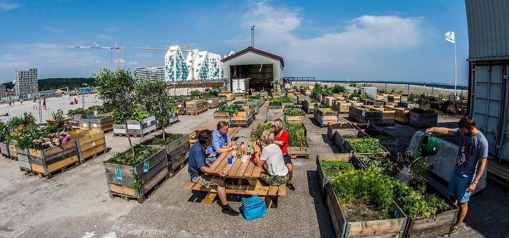 Urban Gardening Success in Aarhus, Denmark