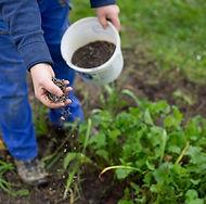 Fertilizing the garden by bio granular f