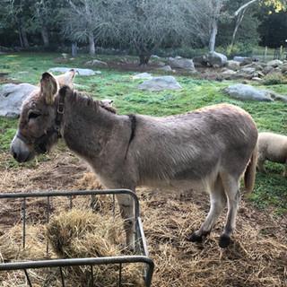 Diego our Donkey