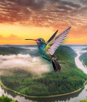 Kolibrie, De Kolibrie, Groningen, Vreugde, Leven, Dchoonheid, Esthetiek, Liefde, Vreugde, Natuur, Harmonie, Evenwicht, Geluk, Cranio Sacraal