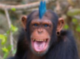 punk monkey.jpg