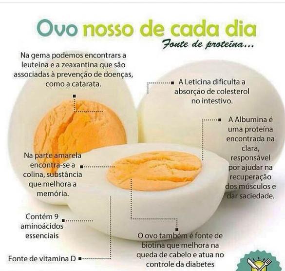 Os benefícios do ovo para nossa saúde.