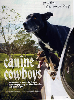 Ranch Dogs Cover.jpg