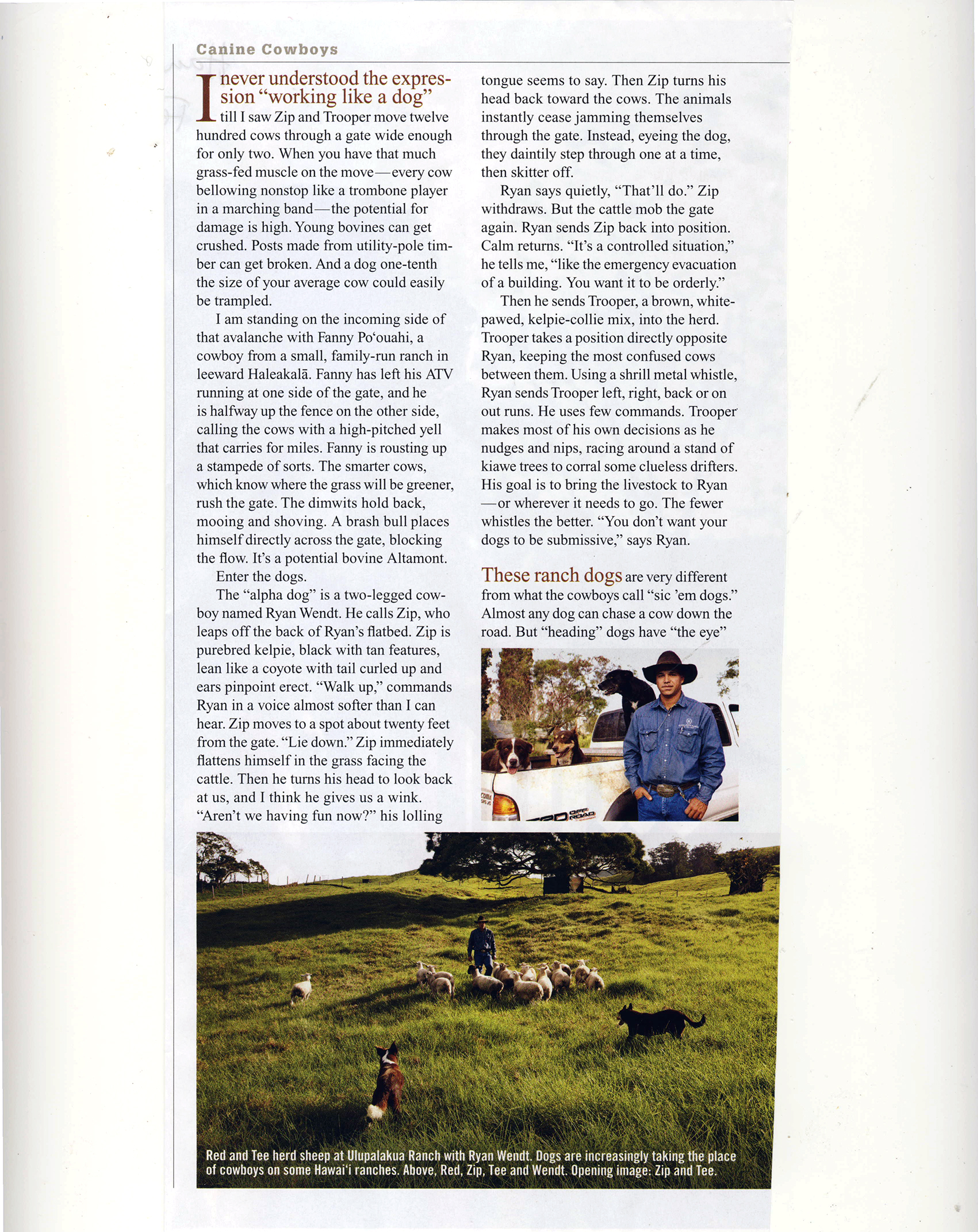 Ranch Dogs_Page_2