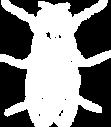 Tuhohyönteiden torjunta