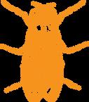 Tuhohyönteisten torjunta