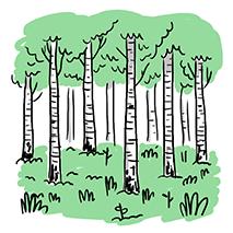 Wood1.1 copy