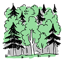 Wood1.8 copy