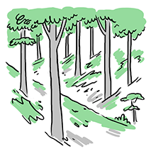 Wood1.5 copy