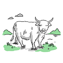 Scot1.4(Cow) copy