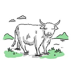 Scot1.4(Cow) copy
