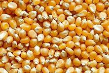 Popcorn grain sellers in lagos, Popcorn grain sellers in Ajah, Popcorn distributors in Lagos, Popcorn grain suppliers in Lagos, Popcorn suppliers in Lagos state, The best Popcorn in Nigeria, Popcorn for event in Lagos