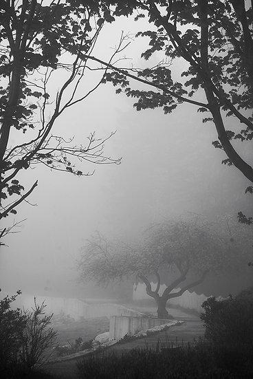 Apple Tree Shore Path