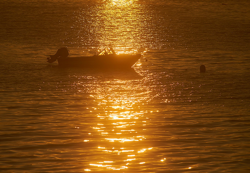 Bar Harbor Gold