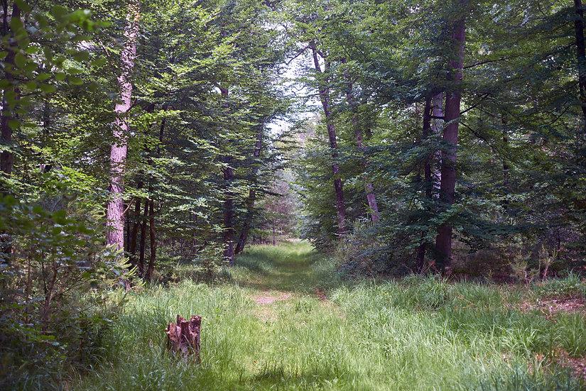Fountain Bleau Forest Trail
