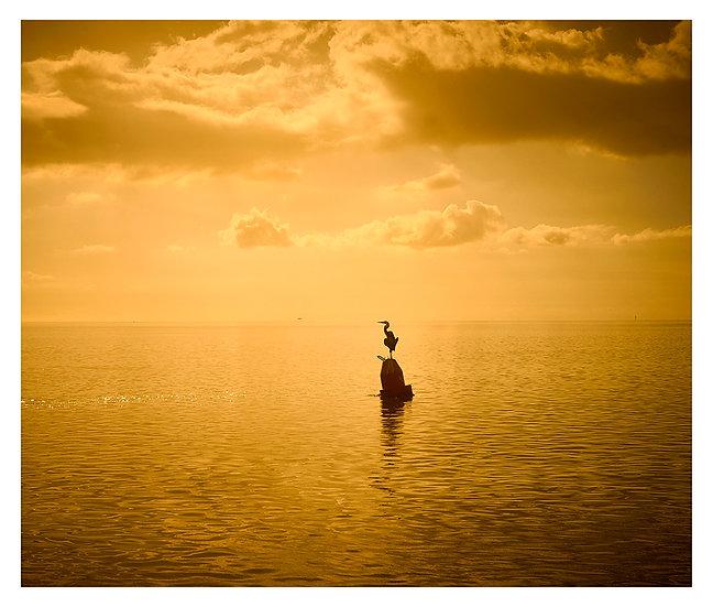 Key West Golden 2