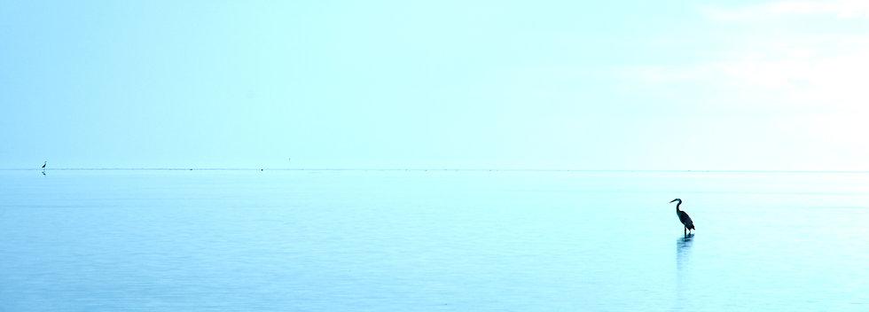 Crane On the Horizon