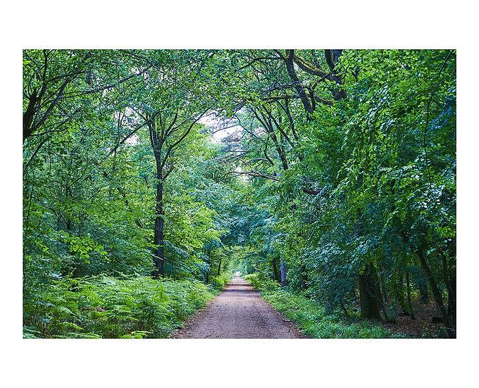 Fountainbleau Forest