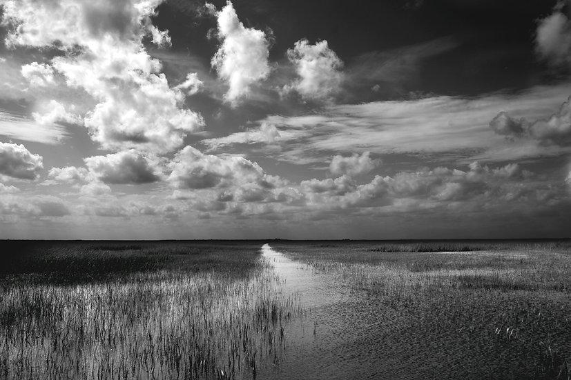 Everglades Black and White