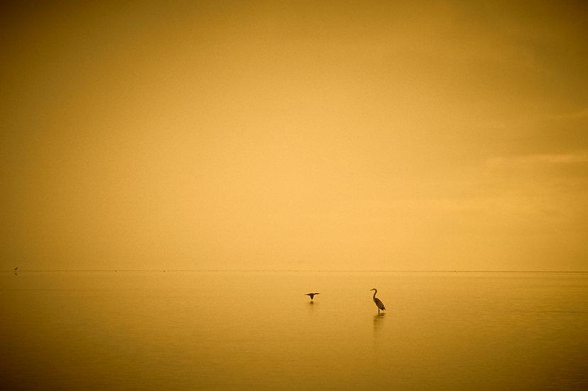 Key West Golden