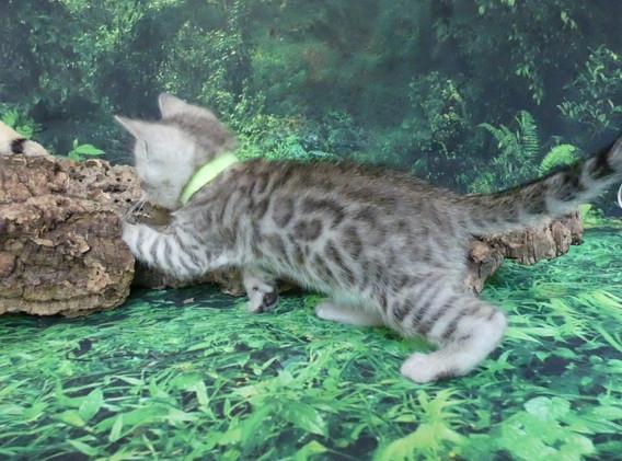 green boy paw in wood.JPG