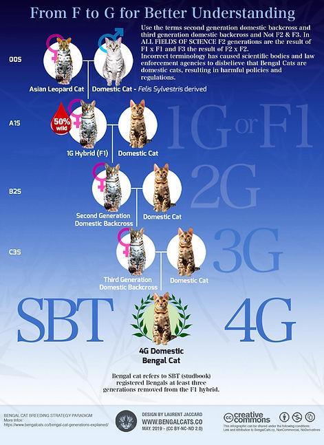 bengal-cat-generations-filial-foundation-infographic_edited.jpg