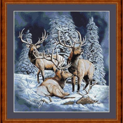 Elks in Winter
