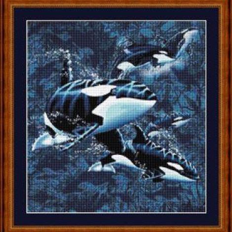Orcas Underwater