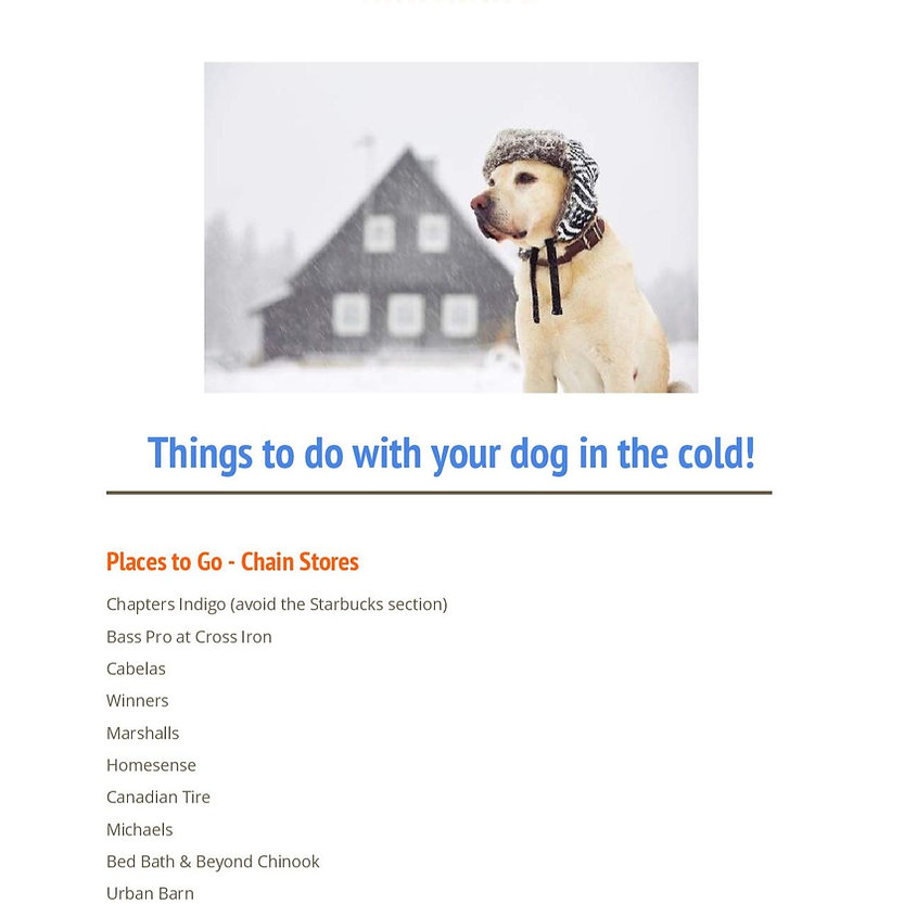 Cold weather activities dogs things to do calgary